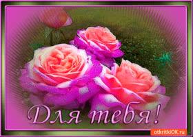 Картинка для тебя свежие розы