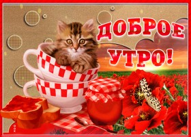 Картинка доброе утро котенок