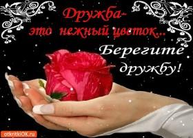 Открытка дружба это нежный цветок - берегите дружбу