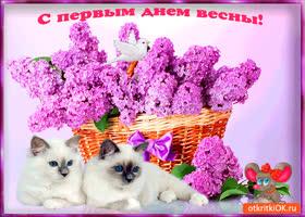 Картинка друзьям с первым днём весны
