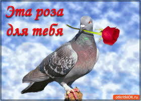 Открытка эта роза для тебя!