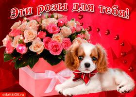 Открытка эти розы только для тебя, хорошего настроения