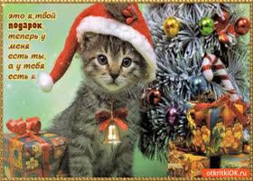 Открытка я твой подарок
