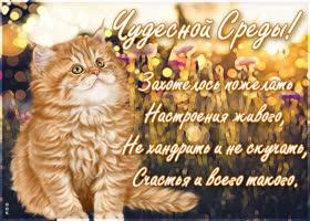 Картинка картинка чудесной среды с котиком