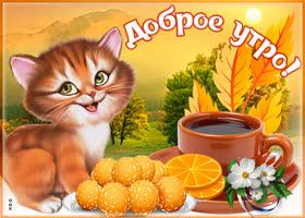 Картинка картинка доброе утро с кошкой