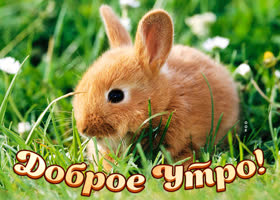 Картинка картинка доброе утро с кроликом