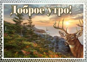 Картинка картинка доброе утро с оленем
