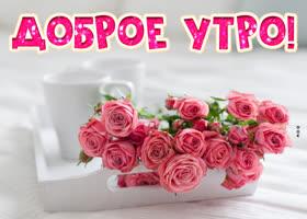 Картинка картинка доброе утро с розами