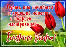 Открытка картинка доброе утро с тюльпанами