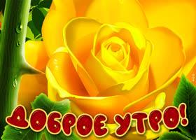 Открытка картинка доброе утро с желтой розой