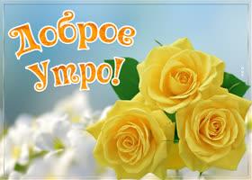 Картинка картинка доброе утро желтые розы