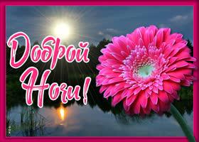 Открытка картинка доброй ночи с цветком