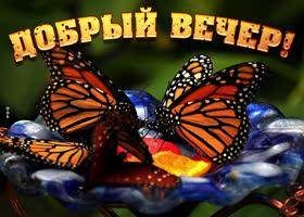 Открытка картинка добрый вечер с бабочками