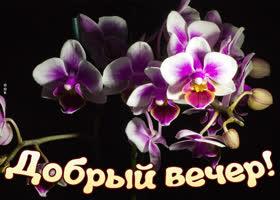 Картинка картинка добрый вечер с орхидеями