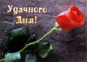 Картинка картинка хорошего дня с розой