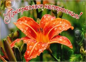Картинка картинка хорошего настроения с лилией