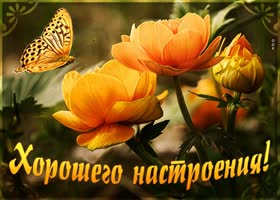 Открытка картинка хорошего настроения с великолепными цветами
