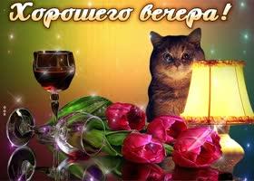Открытка картинка хорошего вечера с котом