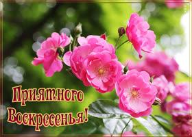 Открытка картинка приятного воскресенья с розами