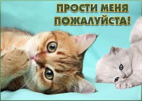 Картинка картинка прости с котиками