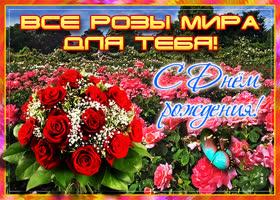 Картинка картинка с днем рождения женщине все розы мира