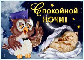 Картинка картинка сладких снов с котиком