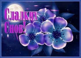 Картинка картинка сладких снов с синими цветами