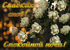 Картинка картинка сладких снов с цветами