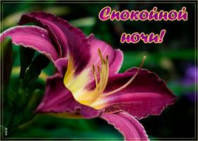 Открытка картинка спокойной ночи с лилией