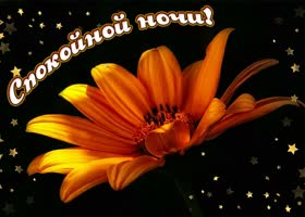 Картинка картинка спокойной ночи с оранжевым цветком