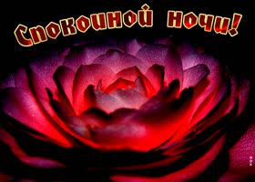 Картинка картинка спокойной ночи с розой