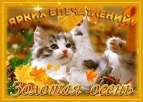 Картинка картинка ярких впечатлений осенью