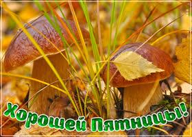 Картинка картинка яркой пятницы с грибами