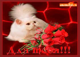 Картинка кот любви