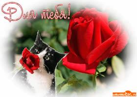 Открытка котик с розой