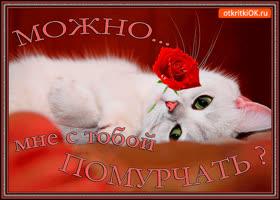 Картинка котик с цветком