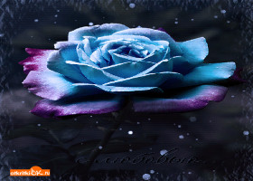 Открытка красивая роза бесплатно