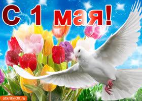 Картинка красивая открытка с 1 мая