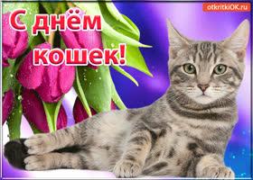 Открытка красивая открытка с днём кошек