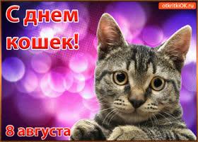 Картинка красивая открытка с днём кошек