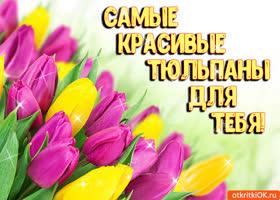 Открытка красивая открытка с тюльпанами