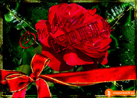 Картинка открытка красивые цветы
