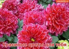 Открытка красивые цветы для тебя!