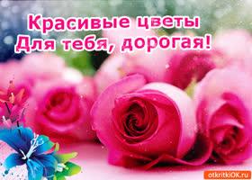 Картинка красивые цветы для тебя, дорогая!