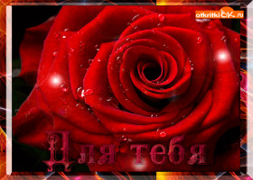 Открытка красная роза для тебя