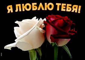 Картинка креативная картинка с розами