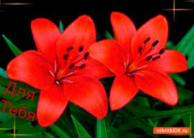 Открытка лилии для тебя