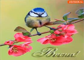 Картинка любимая весна