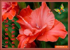 Открытка любимой подружке любимый цветок