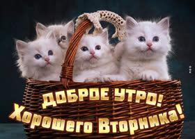Картинка милая картинка хорошего вторника с котиками